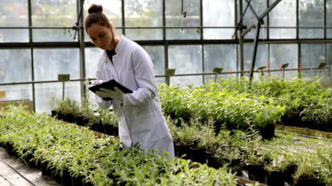 quality control in the greenhouse - quality control stock videos & royalty-free footage