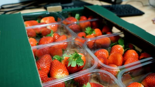 到着したイチゴの温度をチェックする品質管理チーム。 - プラスチック容器点の映像素材/bロール