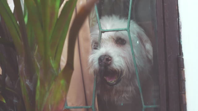 quarantine effect : dog at home - dementia stock videos & royalty-free footage