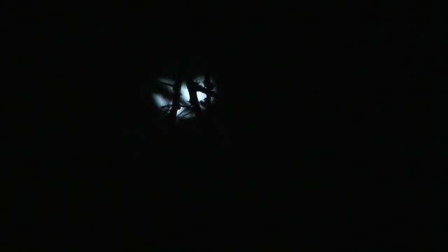 vídeos de stock, filmes e b-roll de a quarter moon shines behind silhouetted tree branches. - espaço e astronomia