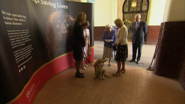 queen and duchess of cornwall meet medical detection dogs; england: london: buckingham palace: royal mews: int queen elizabeth ii along from car and... - royal blue stock videos & royalty-free footage