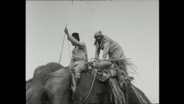 queen and duke on tiger shoot in nepal; **also available as fs020361011** nepal: meghauli: ext queen elizabeth ii on elephant queen off elephant man... - alec douglas home video stock e b–roll