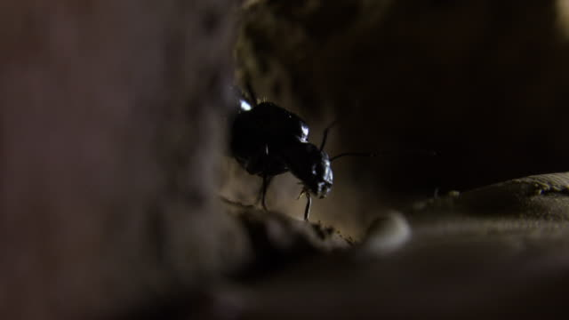queen ant inside her colony - animals in the wild stock videos & royalty-free footage