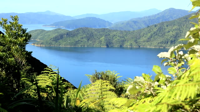 Queen Charlotte Track Landscape, Picton, New Zealand