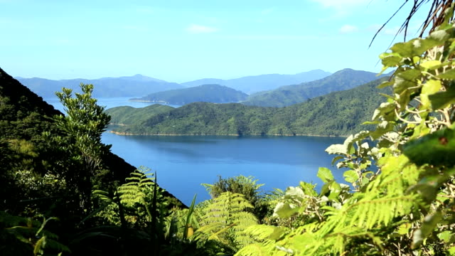 Landschaft, Queen Charlotte Track in Picton, Neuseeland