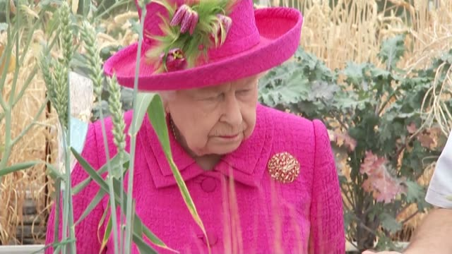 queen elizabeth cambridgeshire visit: national institute of agriculture botany; england: cambridgeshire: histon: national institute of agriculture... - cereal plant stock-videos und b-roll-filmmaterial
