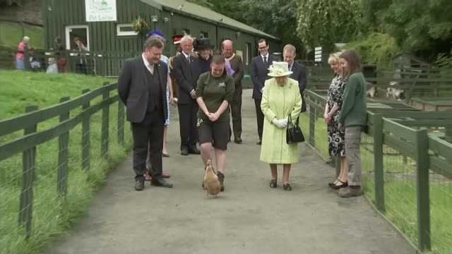 queen elizabeth ii meets cheeky duck during visit to city farm in edinburgh scotland edinburgh gorgie city farm ext queen elizabeth ii accompanied by... - the queen stock videos and b-roll footage