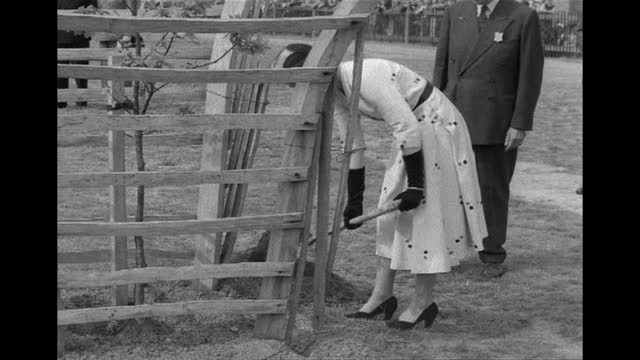 queen elizabeth ii planting tree in windsor great park on behalf of the commonwealth, 1953 - work tool stock videos & royalty-free footage