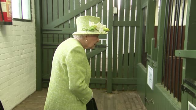 queen elizabeth ii visits gorgie city farm in edinburgh scotland edinburgh gorgie city farm int goat and pigs in stables / queen elizabeth ii... - laughing stock videos & royalty-free footage