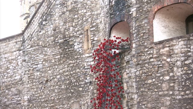 Queen Elizabeth visits poppy installation at Tower of London ENGLAND London Tower of London EXT Various shots of 'Blood Swept Lands and Seas' poppy...