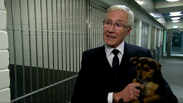 queen opens new kennels at battersea dogs and cats home int paul o'grady interview sot close shot corgi dog amanda holden interview sot pan kennels... - paul o'grady stock videos & royalty-free footage
