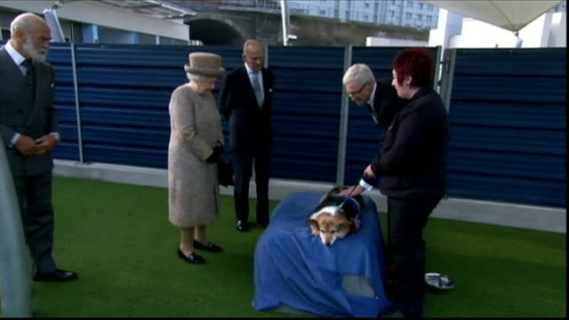 queen opens new kennels at battersea dogs and cats home various shots the queen prince philip and paul o'grady with corgi dog - paul o'grady stock-videos und b-roll-filmmaterial