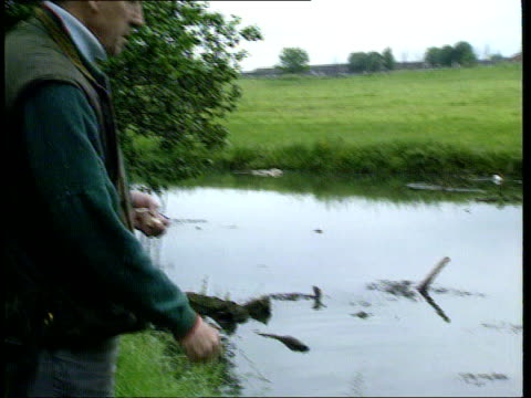 Queen's birthday Honours Awards Staffs Bert Coleman throwing bread TILT DOWN swans and cygnets