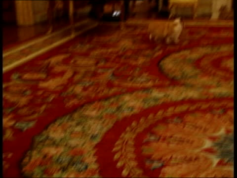 queens corgi killed by princess annes dog; lib london: buckingham palace: corgis around during queen elizabeth ii's reception for the england rugby... - königin stock-videos und b-roll-filmmaterial