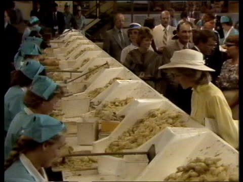 australia queensland ms prince and princess of wales in crowds bv charles and diana walk tilt up 'ginger growers' ms diana looking at ginger sorters... - sugar cane stock videos and b-roll footage