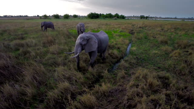 quenching his thirst - elephant stock videos & royalty-free footage