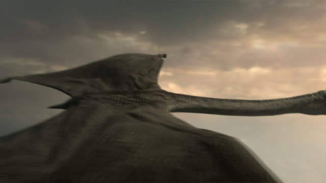 a quetzalcoatlus in flight - gliedmaßen körperteile stock-videos und b-roll-filmmaterial