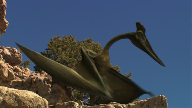 a quetzalcoatlus lands on a rock - dinosaur stock videos & royalty-free footage