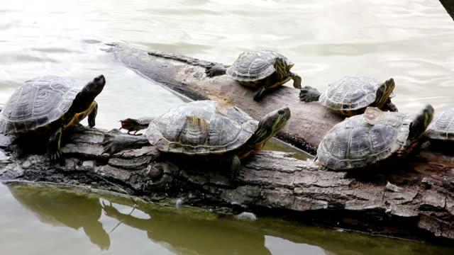Queuing Turtles