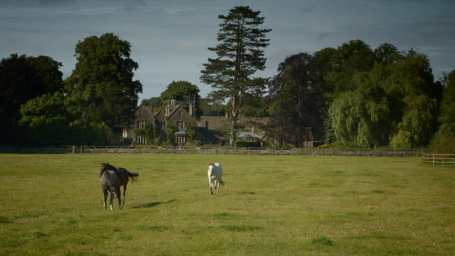 quintessential cotswold country scene with 3 horses - cheltenham stock videos & royalty-free footage
