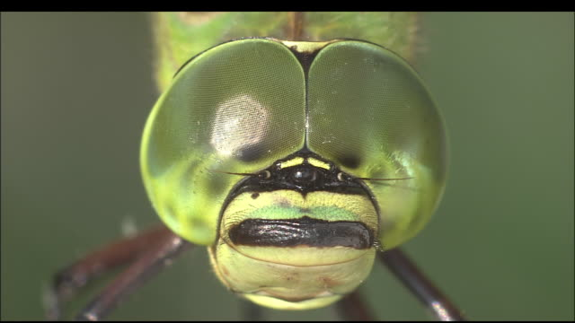 quivering dragonfly eyes, iwata, shizuoka, japan - dragonfly stock videos & royalty-free footage