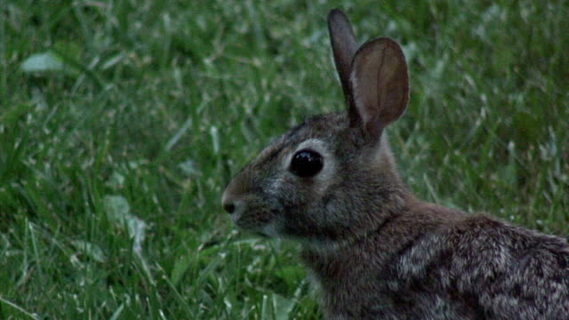 rabbit 6-14: hd/sd 60i - named wilderness area stock videos & royalty-free footage