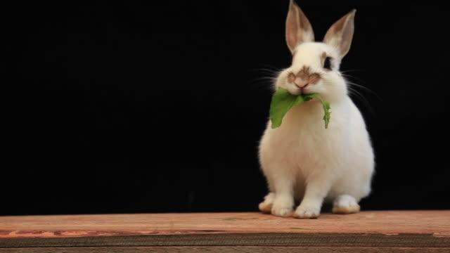 rabbit eating dandelion leaf - rabbit animal stock videos & royalty-free footage