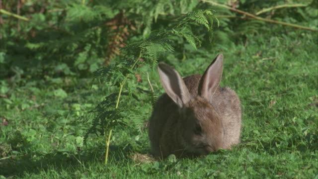 cu, rabbit eating grass and running away - rabbit animal stock videos & royalty-free footage