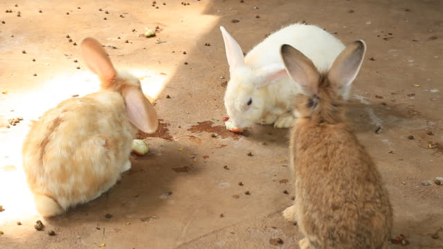 rabbit eating - medium group of animals stock videos & royalty-free footage