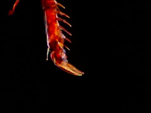 cu rabbit flea foot - gliedmaßen körperteile stock-videos und b-roll-filmmaterial