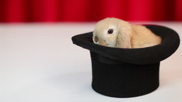 rabbit in a hat - top hat stock videos & royalty-free footage