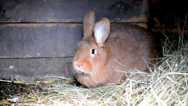 rabbit in cage - hay stock videos & royalty-free footage