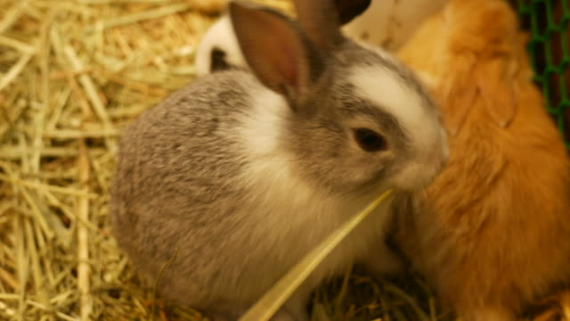 rabbit in farm - hay field stock videos & royalty-free footage