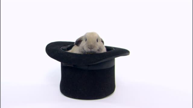 rabbit in hat - hat stock videos & royalty-free footage