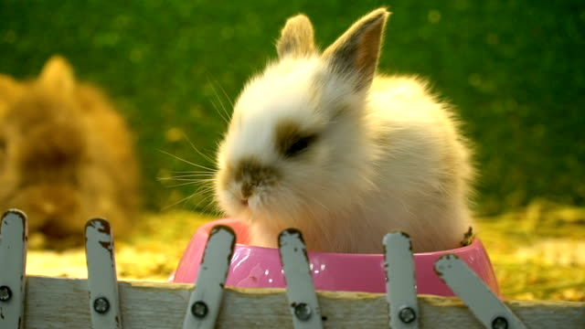 rabbit in pet shop - cartoon p stock videos & royalty-free footage