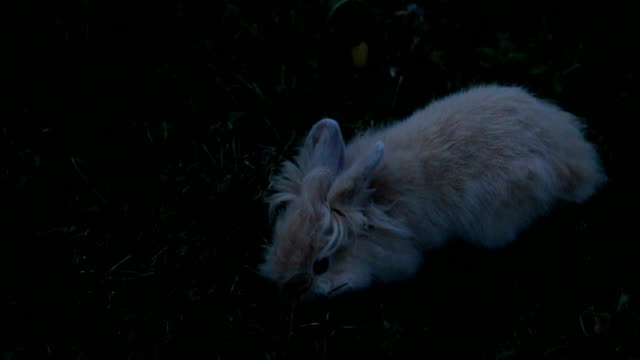 rabbit on clovers - livestock stock videos & royalty-free footage