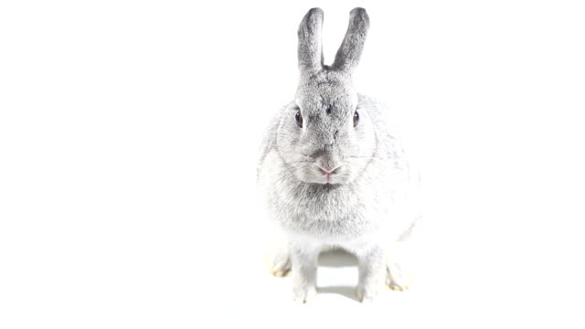 rabbit on white background - rabbit animal stock videos and b-roll footage