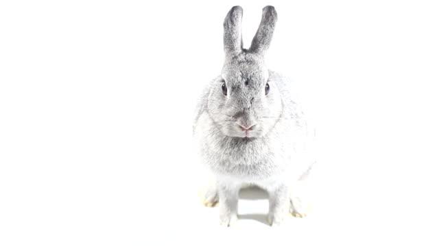 coniglio su sfondo bianco - sfondo bianco video stock e b–roll