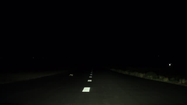 rabbit running crossing the highway at night in usa - headlight stock videos and b-roll footage