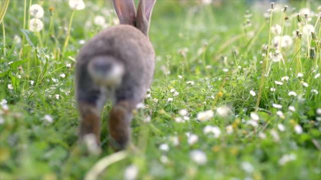 rabbit running happy on grass. - rabbit animal stock videos & royalty-free footage