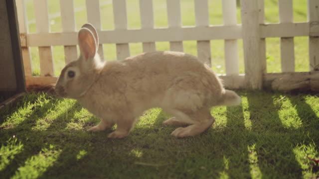 stockvideo's en b-roll-footage met konijn wordt uitgevoerd in een tuin. - cottontail