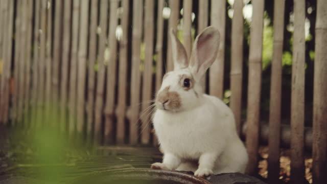 vidéos et rushes de lapin circule dans un jardin. - rongeur