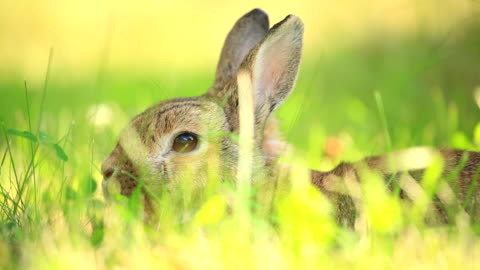 vídeos y material grabado en eventos de stock de conejo - pascua
