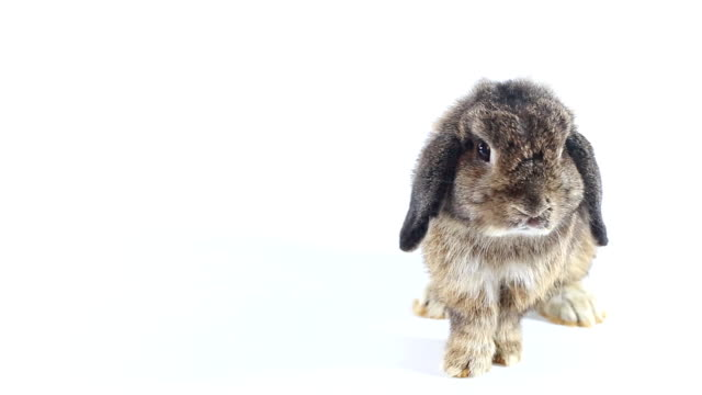 rabbit - rabbit animal stock videos & royalty-free footage