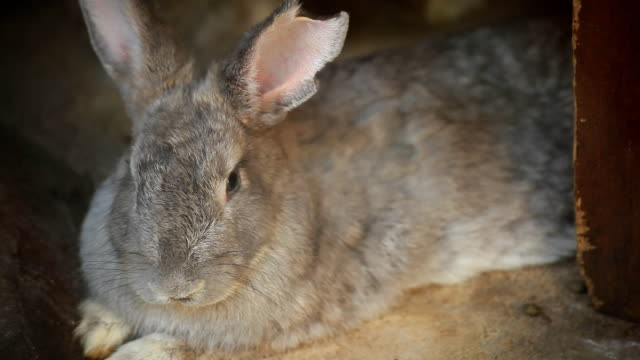 rabbit - grey colour stock videos & royalty-free footage