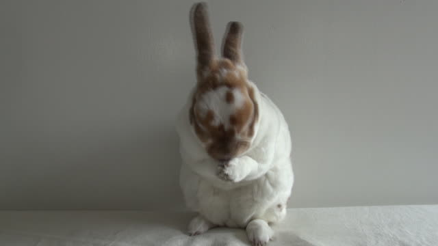 rabbit - rabbit animal stock videos and b-roll footage