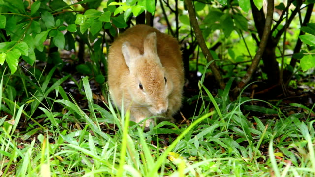stockvideo's en b-roll-footage met rabbit - dierenverzorging