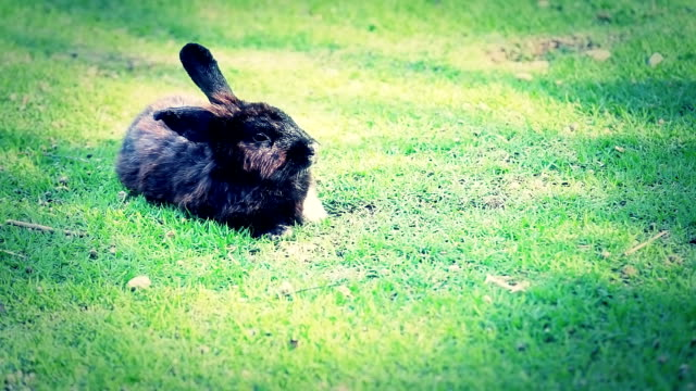 rabbit - cottontail stock videos & royalty-free footage