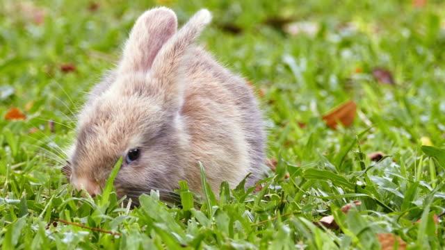 stockvideo's en b-roll-footage met konijn - cottontail