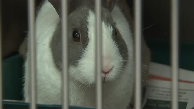 Rabbit with twitching nose and other rabbits in cages at SPCA